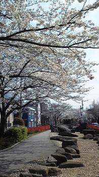 桜4・7 (1).jpg